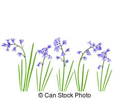 Bluebell clipart  Bluebell pictures bluebells Stock