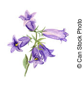Bluebell clipart british Image Watercolor   illustration