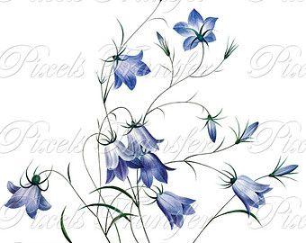 Bluebell clipart flower power Tattoo on bell flower Search