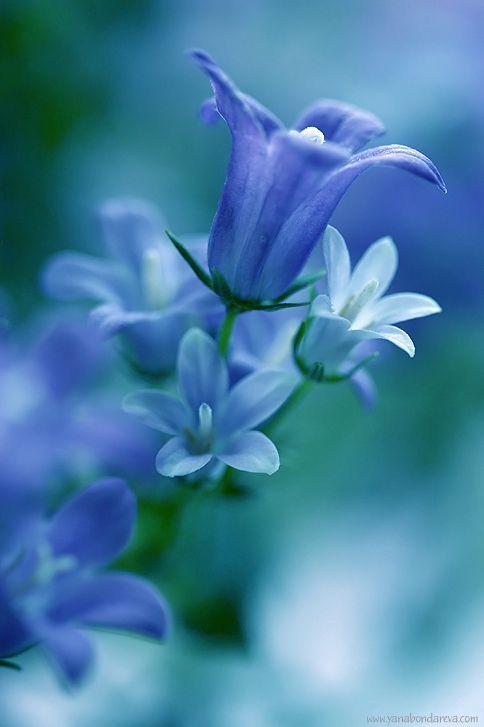 Bluebell clipart flower power Blue flower Pinterest shaped bells