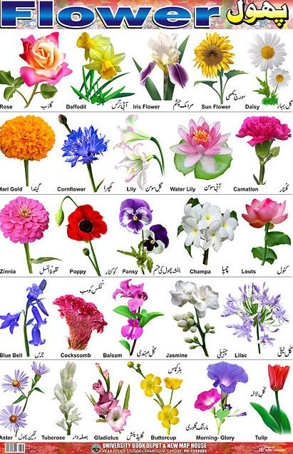 Bluebell clipart flower power View pruning bulbs View Flower