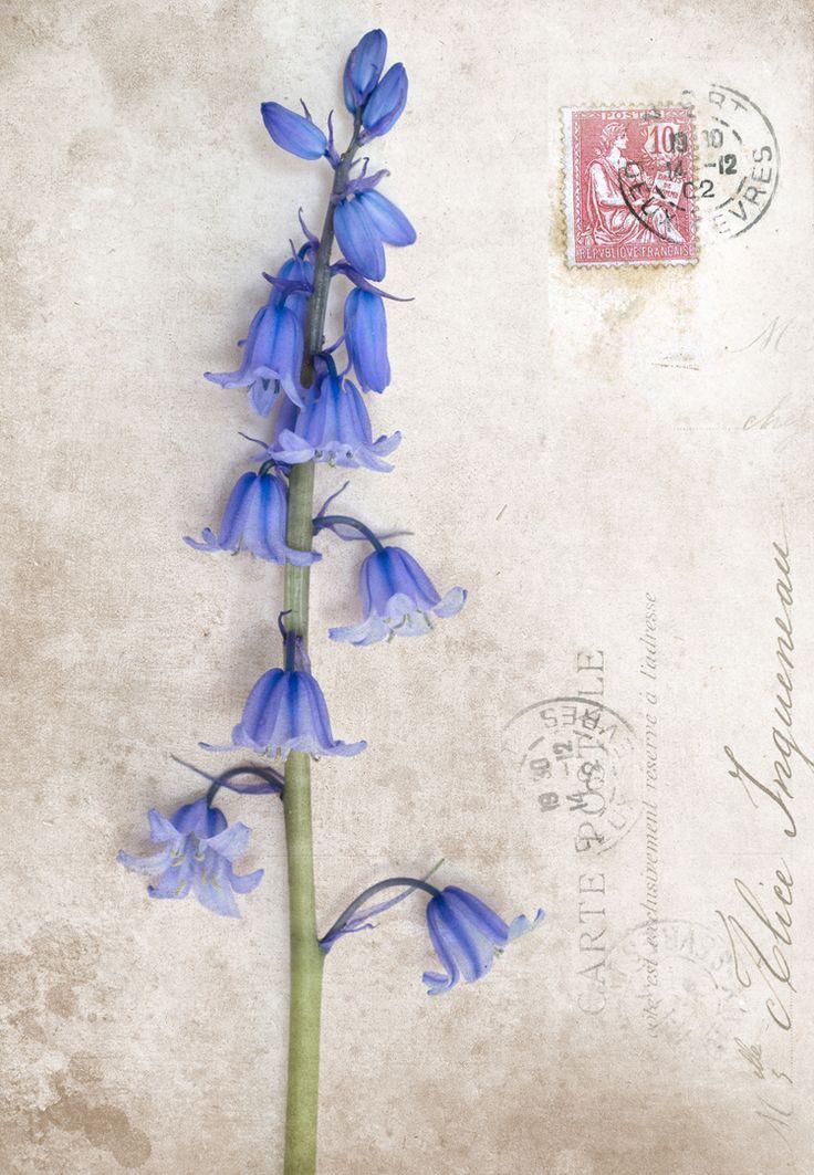 Bluebell clipart flower power 31 a on In Pinterest