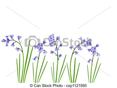 Bluebell clipart single Of Bluebells Abstract of Spring