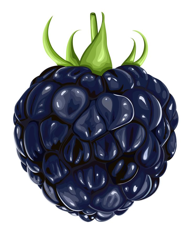 Blueberry clipart blackberry fruit Fruits Fruit best Clipart PNG