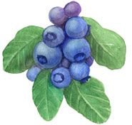 Blueberry clipart bucket WORK FOR MARKERS 6 Blueberry