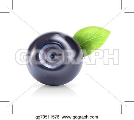 Blueberry clipart fresh Stock  Vector Vector gg79511576