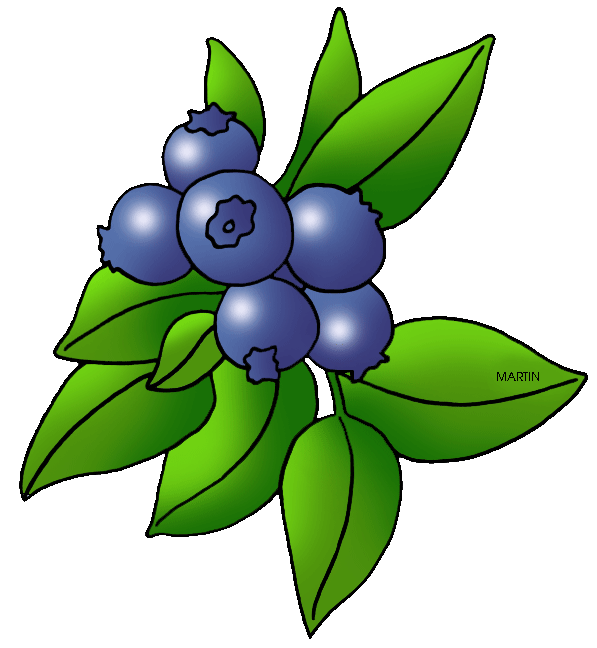 Blueberry clipart single United Download Clipart on Free