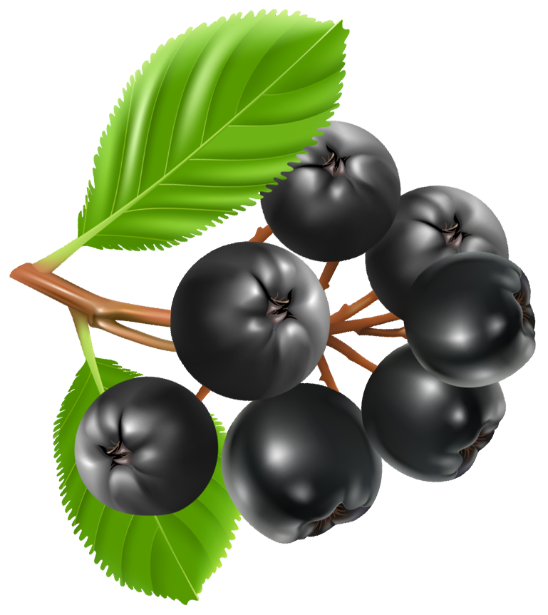 Blueberry clipart transparent Full View Clipart PNG Gallery