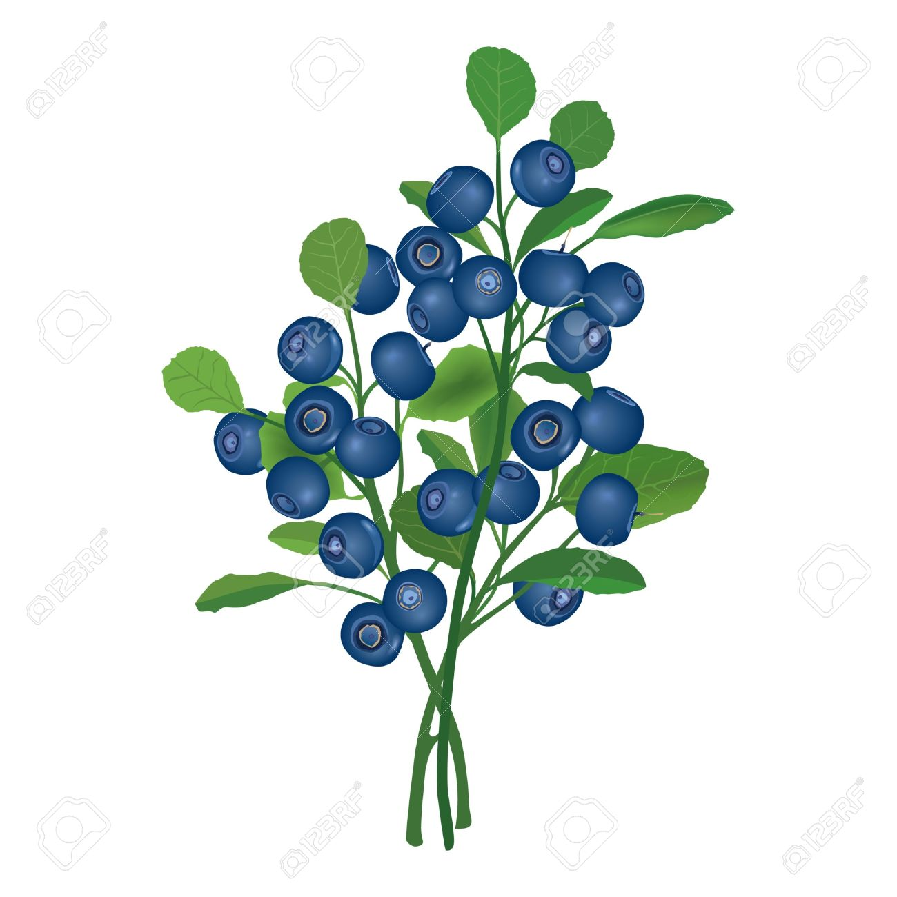Drawn rose bush two Bush Clipart Blueberry Berry cliparts