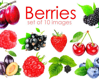 Blueberry Muffin clipart berry Image Digital cherry illustration Fruit