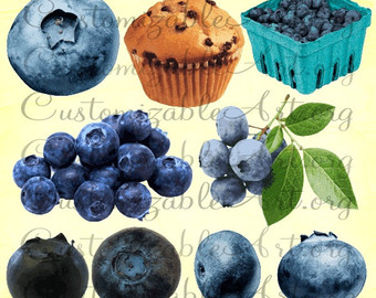 Blueberry clipart blueberry muffin Leaves Realistic Muffin Blueberry Berry