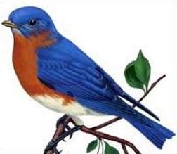Bluebird clipart Clipart Free Bluebird Bluebird