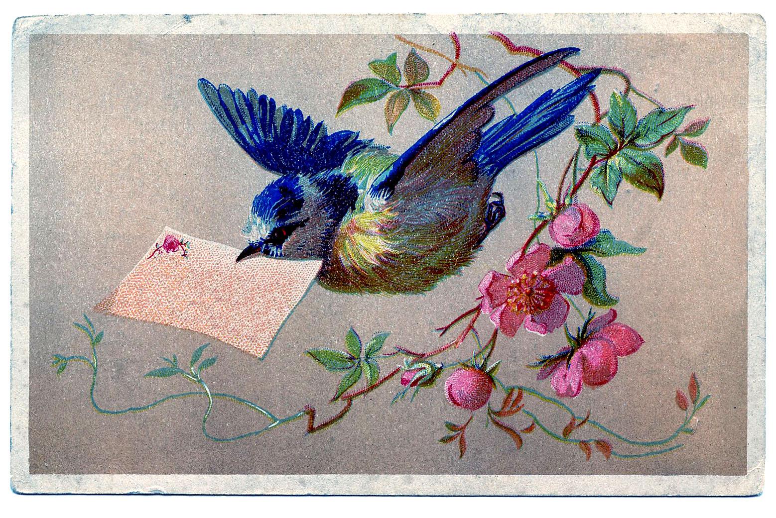 Bluebird clipart vintage With Art Vintage Clip Bluebird