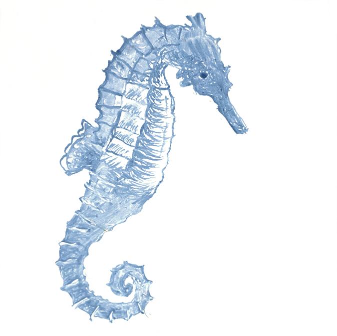 Seahorse clipart navy blue #3