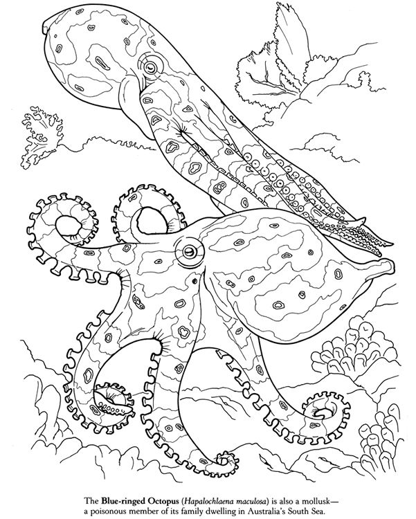 Drawn squid squid monster Blue and Page Octopus (Dover