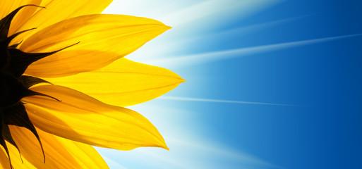 Blur clipart sunflower > Sunflower Category Sunflowers and