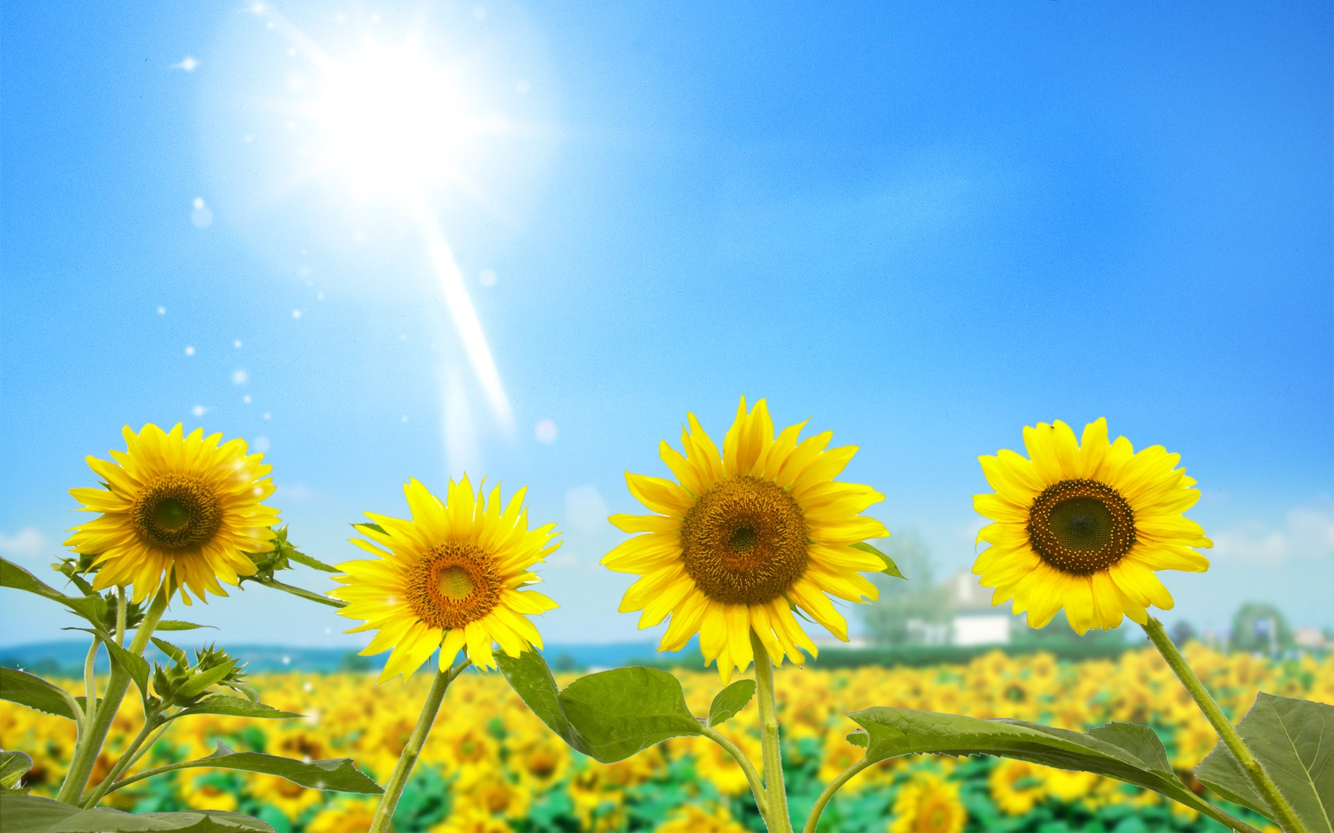 Blur clipart sunflower Desktop Download Blue Photo View