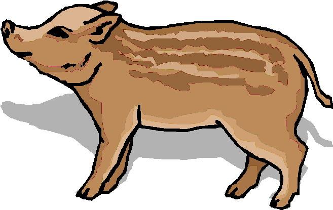 Boar clipart #14