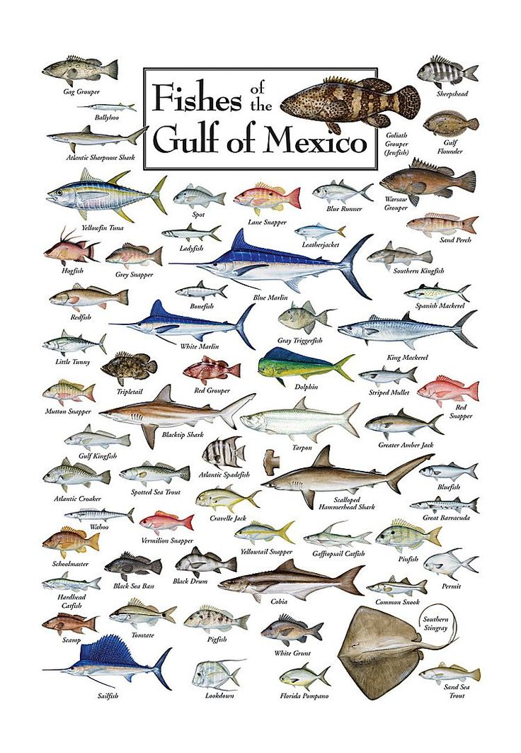 Boat House clipart saltwater fishing Fish Fish Illustrations Saltwater 34