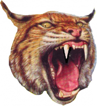 Bobcat clipart berryville Lettermen 4A 1 2 RANKINGS