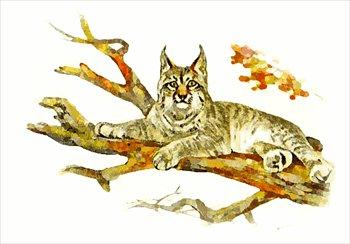 Bobcat clipart lynx Clipart free Lynx print Clipart