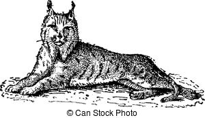 Bobcat clipart lynx Engraving vintage Lynx and or
