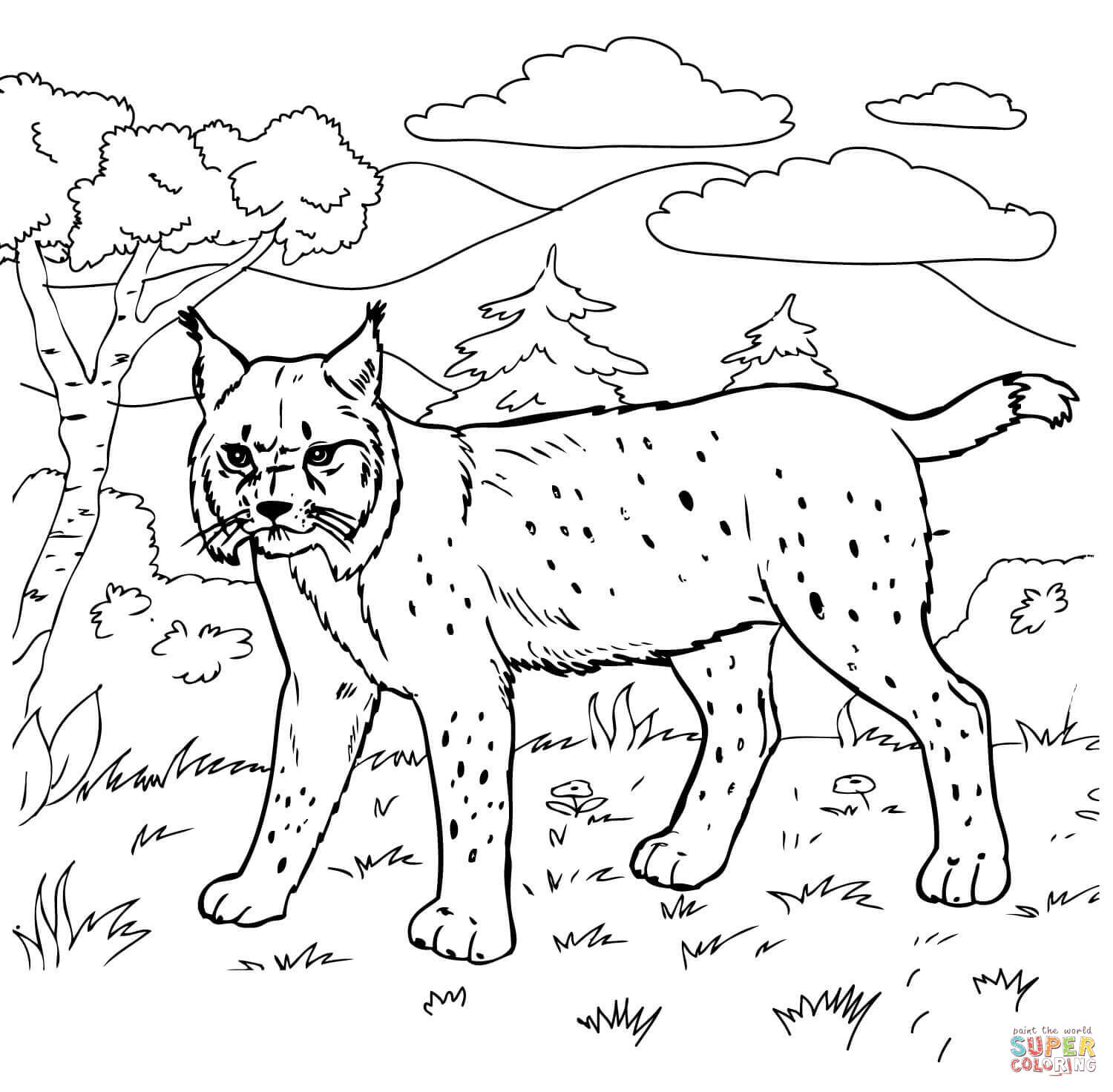 Bobcat clipart realistic In Bobcat Bobcats pages Coloring