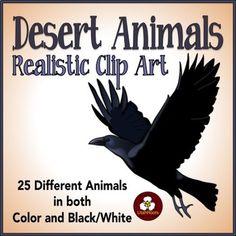 Bobcat clipart realistic Pinterest Animals Desert Bobcat Art