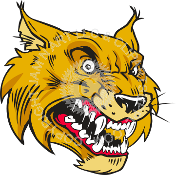 Bobcat clipart vicious Bobcat in color Bobcat Vicious