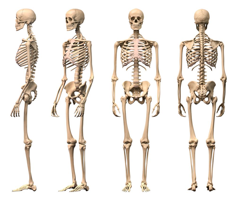 Bones clipart back bone Clip bones? Clip YOUR Download