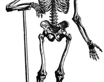 Anatomy clipart biological science #3