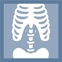 Bones clipart bone health ARS USDA section Health? Soy