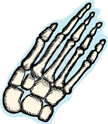 Bones clipart human biology Clipart Images Bone bone%20clipart Free