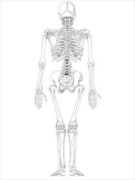 Bones clipart human body BW BW skeleton Human Free