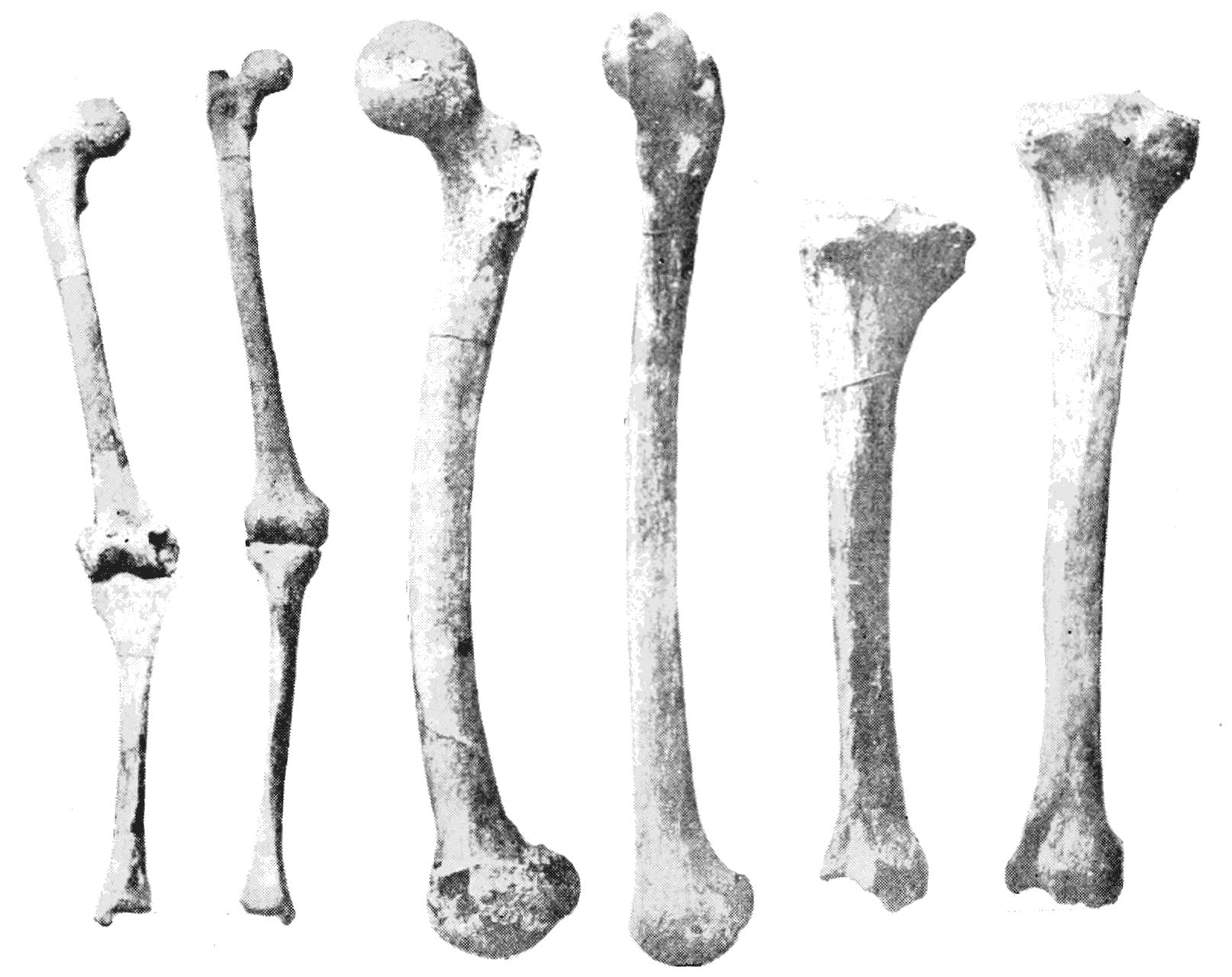 Bones clipart leg bone 11th March SketchDaily permalink Bones