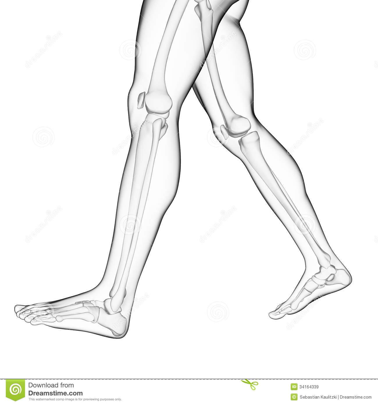 Bones clipart leg bone Drawing bone Leg leg Clipart