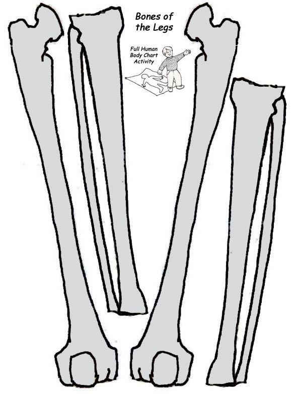 Bones clipart leg bone Tamaño Pinterest a imprimir Esqueleto