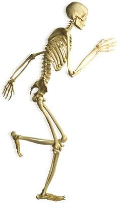 Bones clipart our body Handout blog: info a based