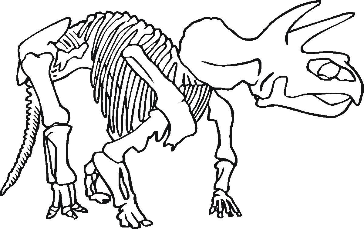 Drawn bones Skeleton Dinosaur Art  clipart