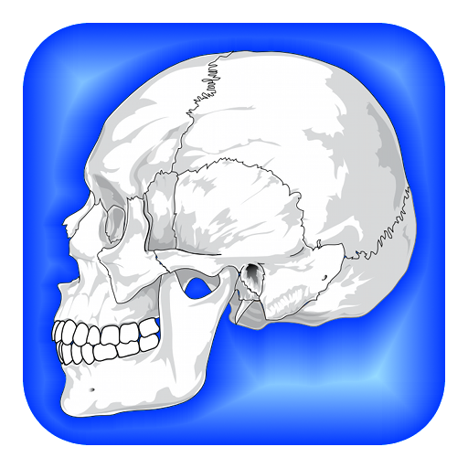 Bones clipart science is fun Parts Physiology Amazon Body of
