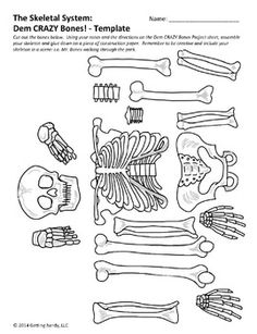 Bones clipart science is fun Muscular with Really System