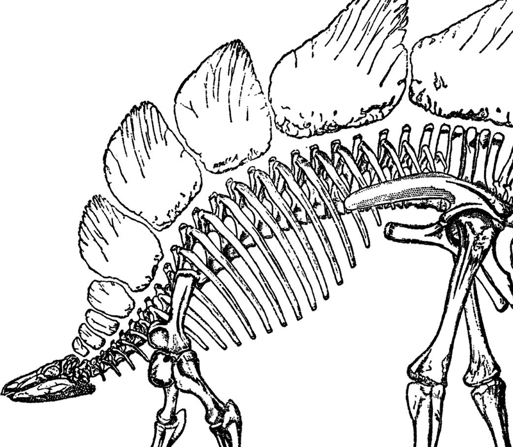 Bones clipart stegosaurus Stegosaurus Bones Graphics Fairy Domain