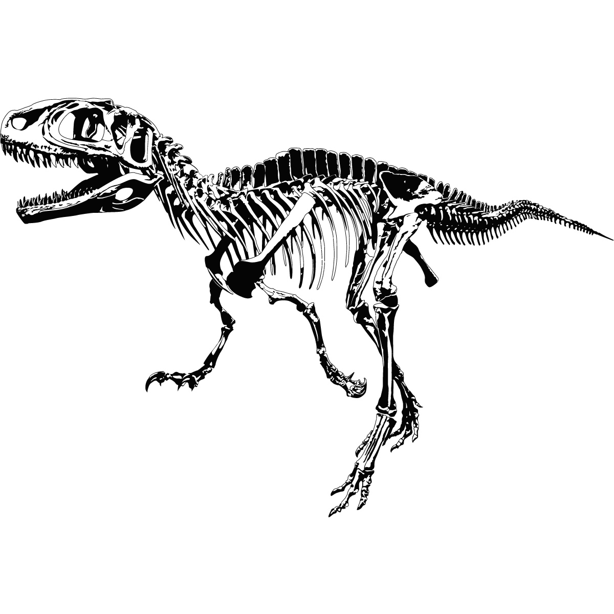 Bones clipart t rex Rex Art Decal Dinosaurs Decal