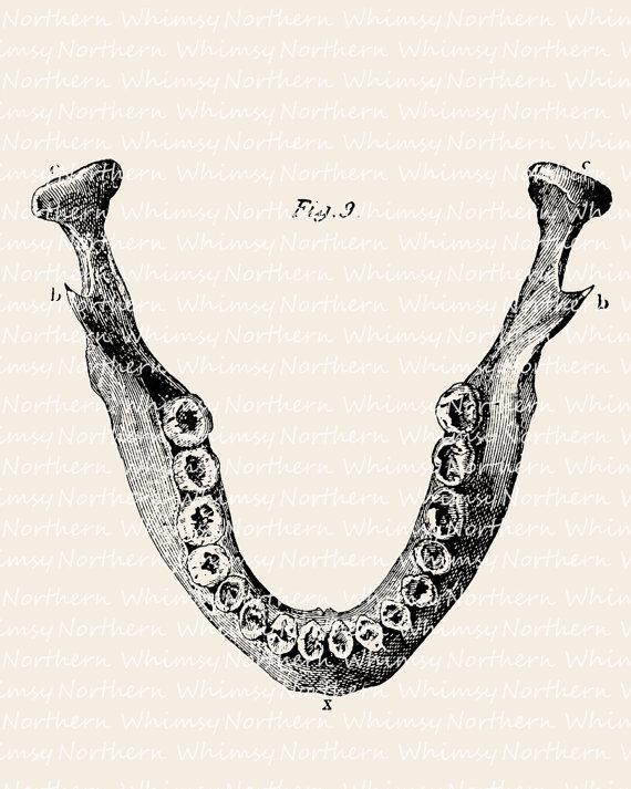Bones clipart tooth Printable Art Illustration Jaw –