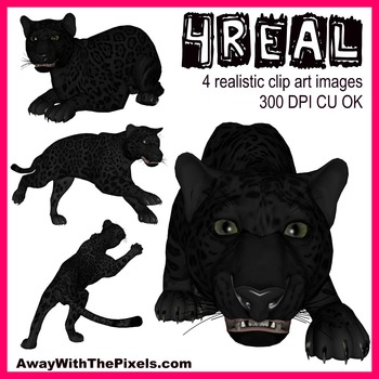 Bonobo clipart big cat Panther Realistic Images The Real!