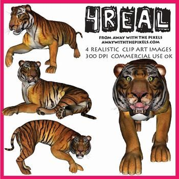 Bonobo clipart big cat Tiger about Images  best