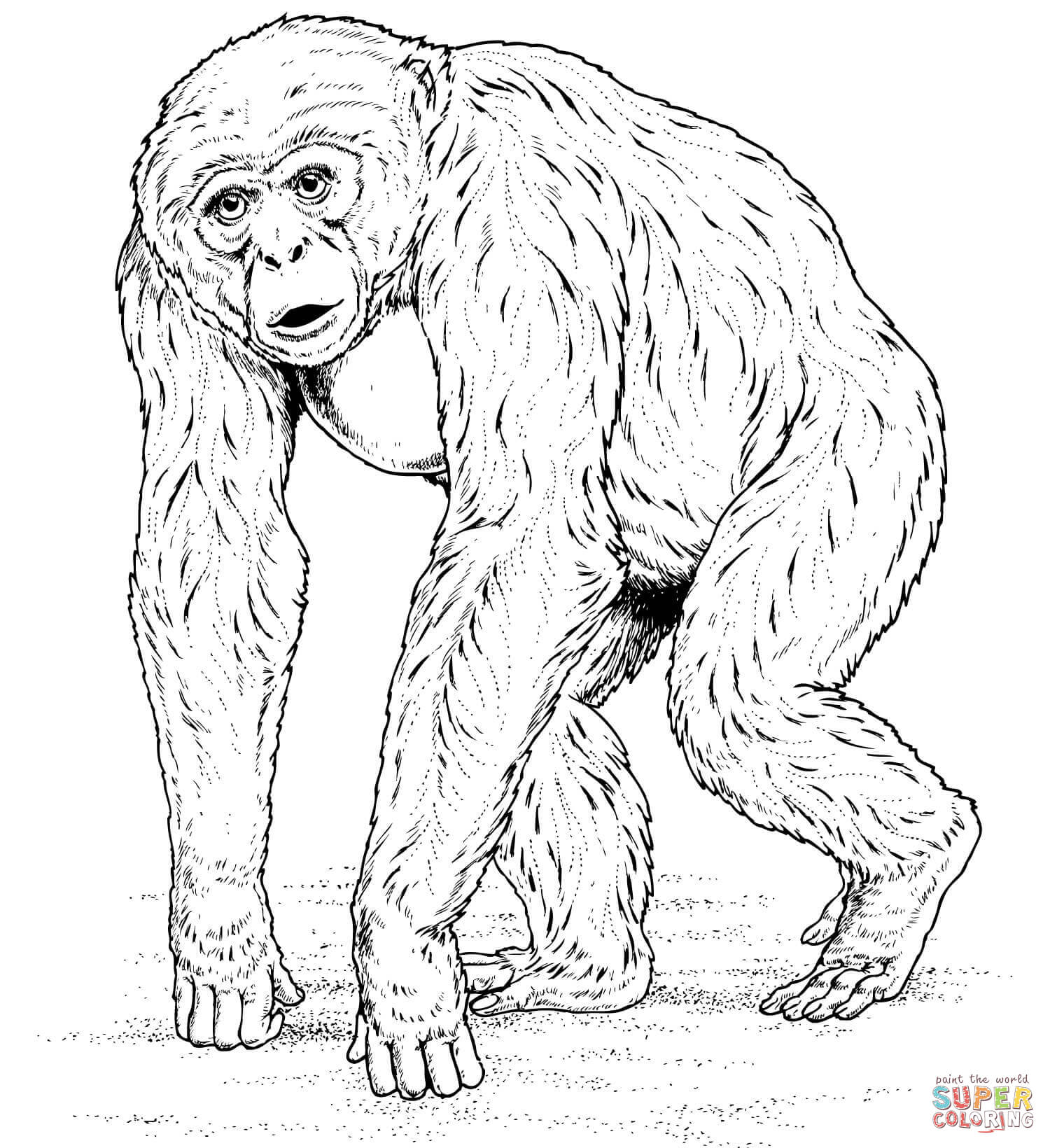 Bonobo clipart black and white Free Chimpanzee coloring Pages Coloring