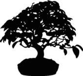 Bonsai clipart Royalty Bonsai Bonsai Bonsai Tree