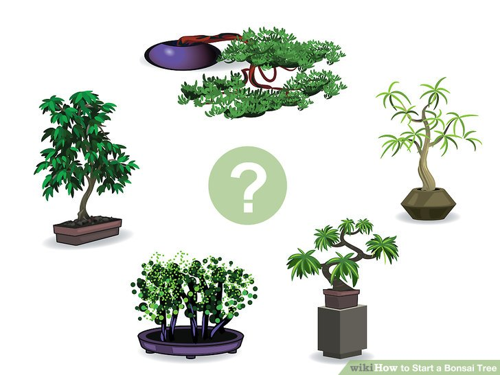 Bonsai clipart cypress tree Tree How 01 to wikiHow