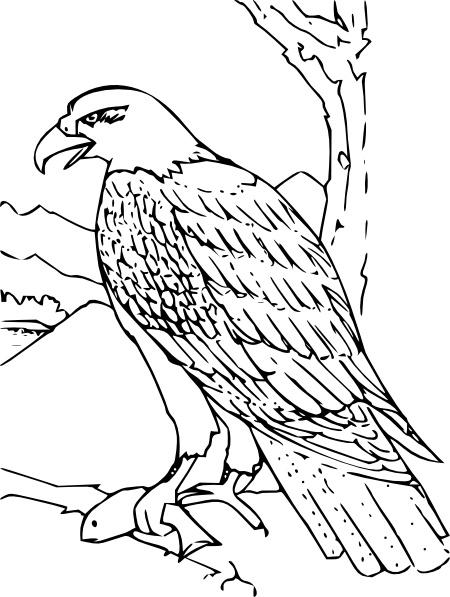 Book clipart eagle  art Coloring in Eagle